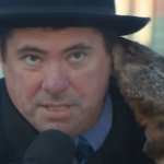 Wisconsin Please Make This Our Groundhog Day Tradition