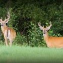 Marion County hunters bag less deer in 1st shotgun deer hunting season