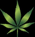 "Marijuana stolen from an ""amnesty box"" at Chicago airport"