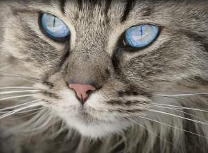 Illinois Public Health officials confirm COVID-19 positive in pet cat