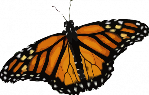 Illinois joins pact to protect monarch butterflies' habitat