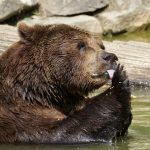 Dumbass Of The Day: A Drunk Man At A Zoo With A Bear. What Could Go Wrong?