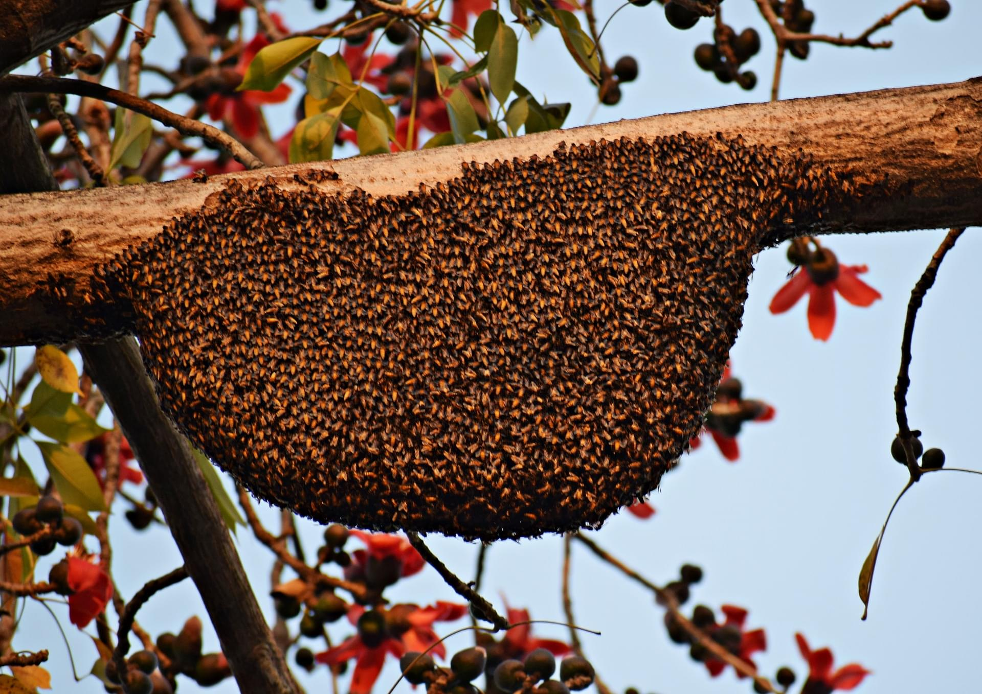 honeybees-4013742_1920