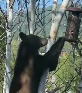 This Naughty Bear Took A Hint [VIDEO]