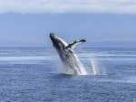 You can now visit Exploding Whale Memorial Park!