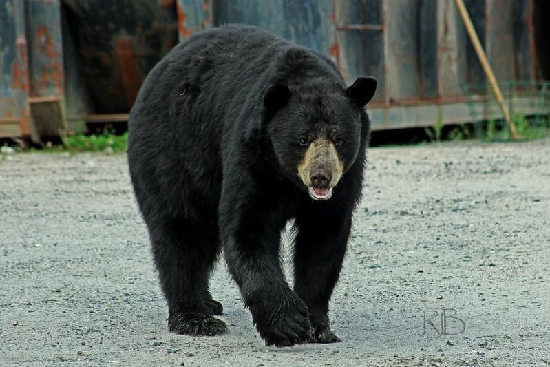 """Wake Up"", Said The Bear [VIDEO]"