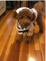 Halloween Costumes For Your Pets!!  REALLY?????