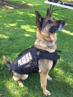 Bakersfield Police K9 officers get protective vests
