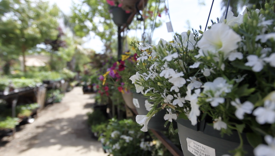 Just some of the beautiful offerings at Bolles Nursery in west Bakersfield at 3255 Allen Road.