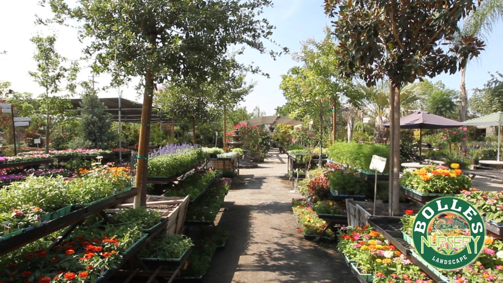 Bolles Nursery offers a huge variety of plants for any landscape project.