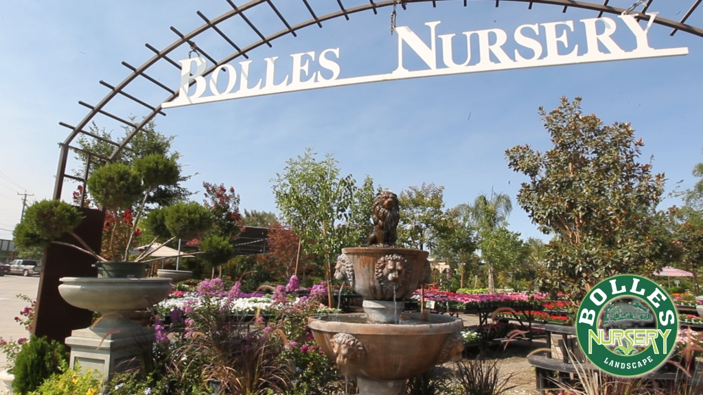 Bolles Nursery's landscaping services aim to provide inspiration