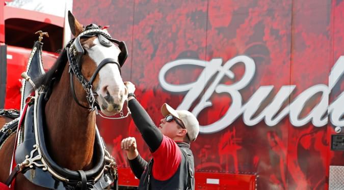 Budweiser sitting out Super Bowl | Cindy Davis |