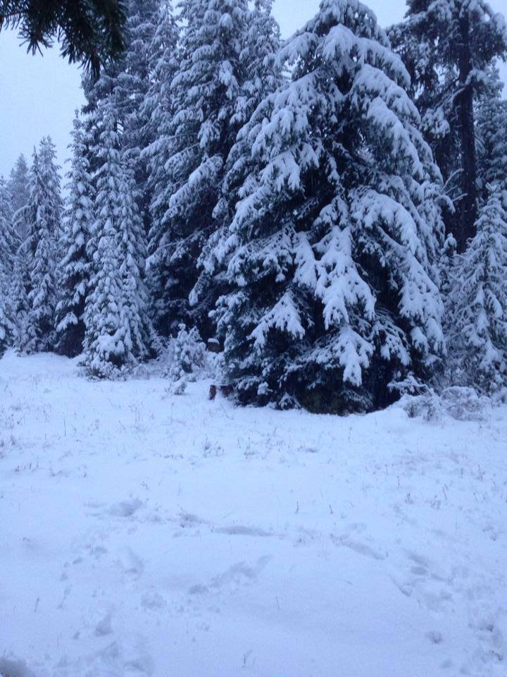 UMATILLA COUNTY:  Snow news is good news