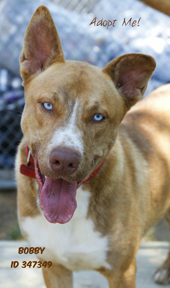 Bobby: Pet of the Week for 8/16/17