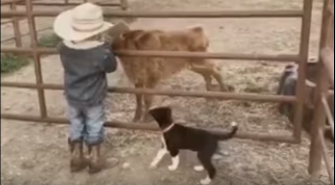 VV5-Feb-20-2020-A-Cute-Little-Cowboy-Doing-His-Ranchwork[1]
