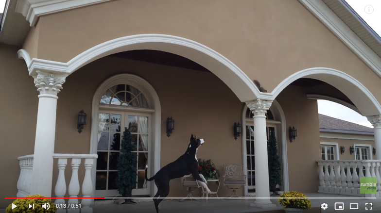 WATCH: Great Dane Gets Teased By A Squirrel