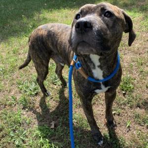 Brett's Pet of the Week! | Zeus