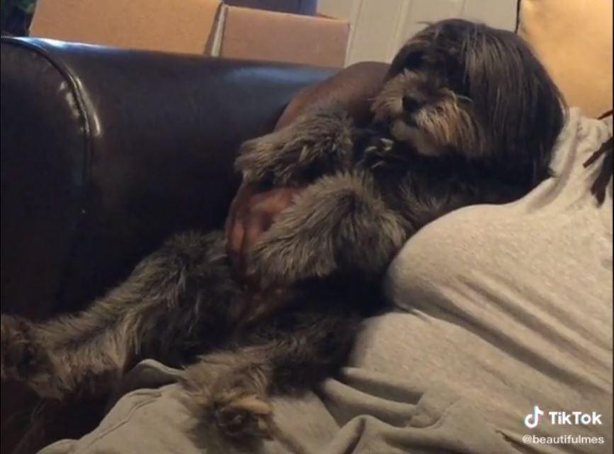 Watch: Doggo Wants A Cuddle