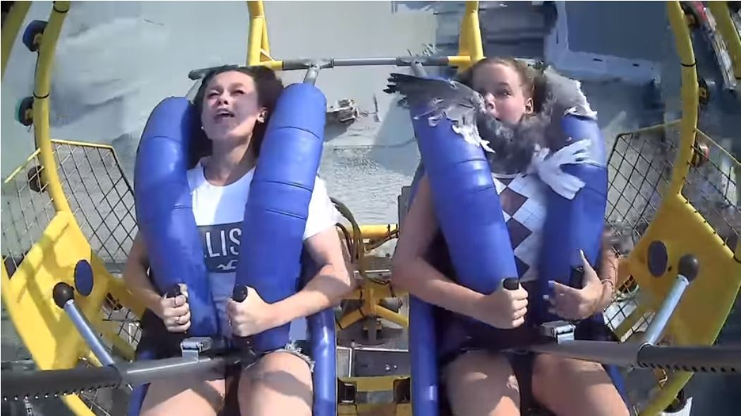 WATCH: Girl On Slingshot Ride Gets Smacked By A Seagull