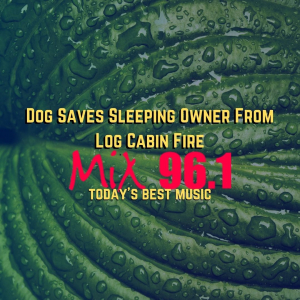 Dog Saves Sleeping Owner From Log Cabin Fire