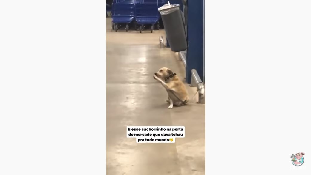 Friendly Dog Waves To Customers At Supermarket