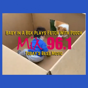 Baby in A Box Plays Fetch With Pooch