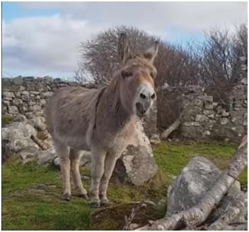 Donkey Sings Opera