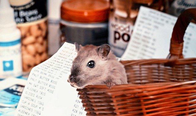 hamster-shopping-4940922_640