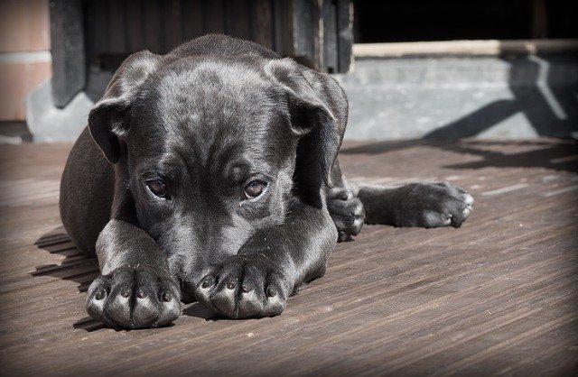 dog-423398_640