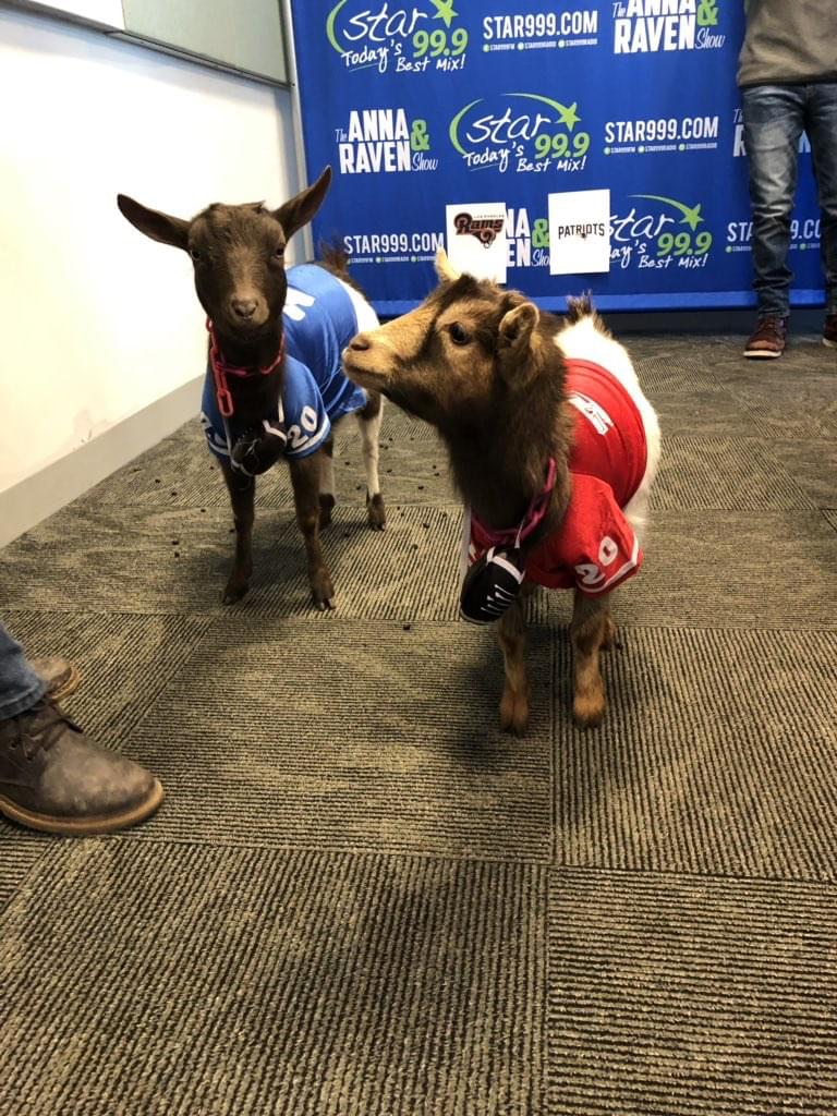 60 Seconds Behind the Scenes- Goats Do What Goats Do