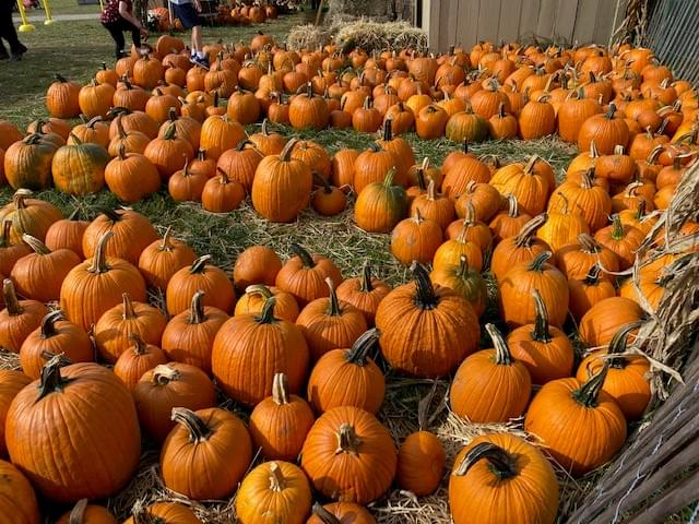 MUNDANE MYSTERIES: Why Are Pumpkins Orange?