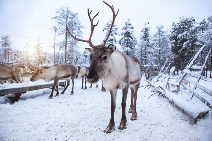 MUNDANE MYSTERIES: Why do reindeer eye's change color with the seasons?