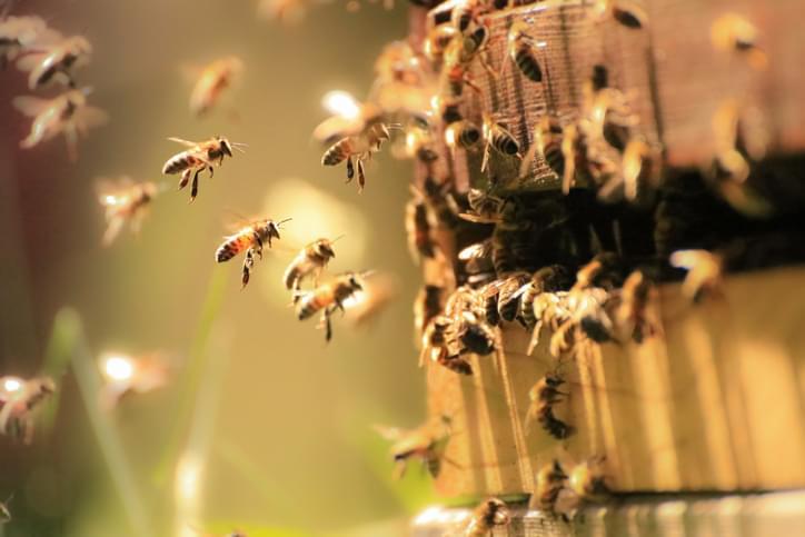 MUNDANE MYSTERIES: Does honey ever go bad?