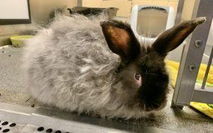 Zeppo the bunny