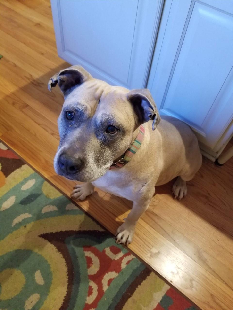 Raven's Pleasant Paws Pet Center Pet Pals – Meet Lucy!