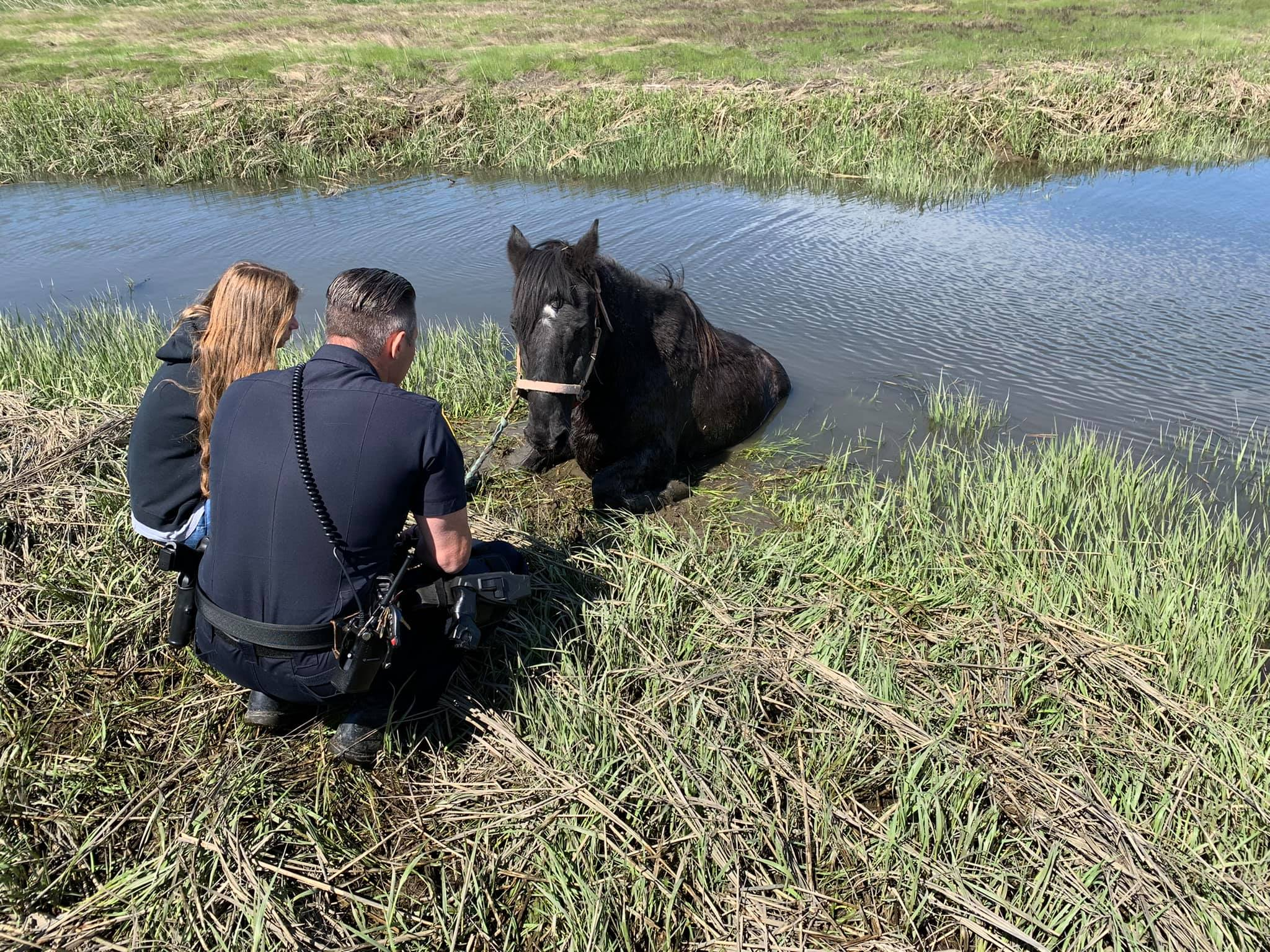 TELL ME SOMETHING GOOD: An Unusual Animal Rescue In Branford