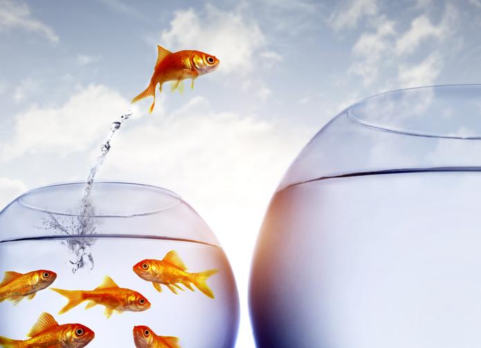 MUNDANE MYSTERIES: Is it true that goldfish have no memory?