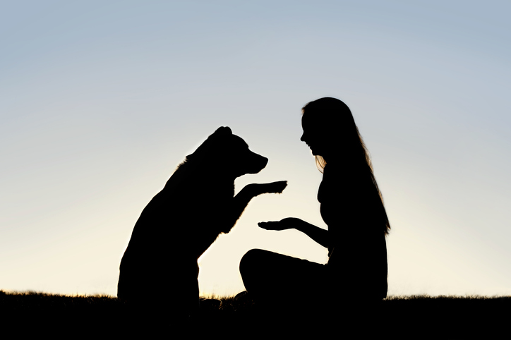 TELL ME SOMETHING GOOD: A pet adoption story with a twist that will blow your mind