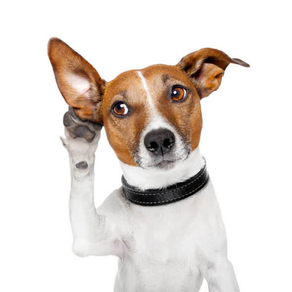 I SHOULD HAVE KNOWN THAT! This is the number 1 word dogs like hearing the most