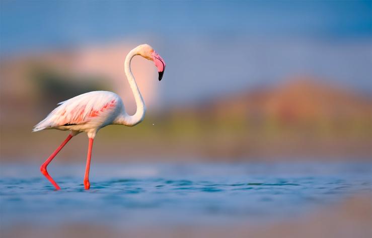 MUDANE MYSTERIES: What makes flamingos pink?