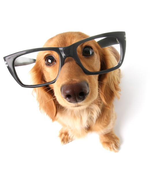 MUNDANE MYSTERIES: Are dogs actually born color blind?