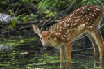 TELL ME SOMETHING GOOD: Connecticut Teen Rescues Deer From Water On Fishing Trip