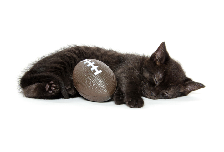 TELL ME SOMETHING GOOD: College football fans save cat that fell from upper deck