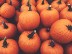 MUNDANE MYSTERIES: Is a pumpkin a fruit or vegetable?