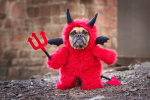 Pet Costumes: Worth It Or Not Worth It?