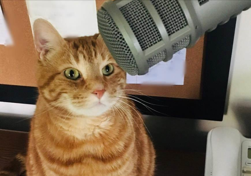 PODCAST – Monday, October 12: Chaz Remembers His Cat; One Of The Worst Football Injuries Ever; Return Of The Rumpologist