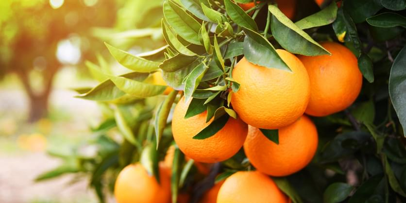 PODCAST – Thursday, February 4: Family Feud, 66 Pounds of Oranges, Frank Stallone