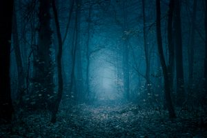Mysterious, blue-toned forest pathway. Footpath in the dark, foggy, autumnal, cold forest among high trees.