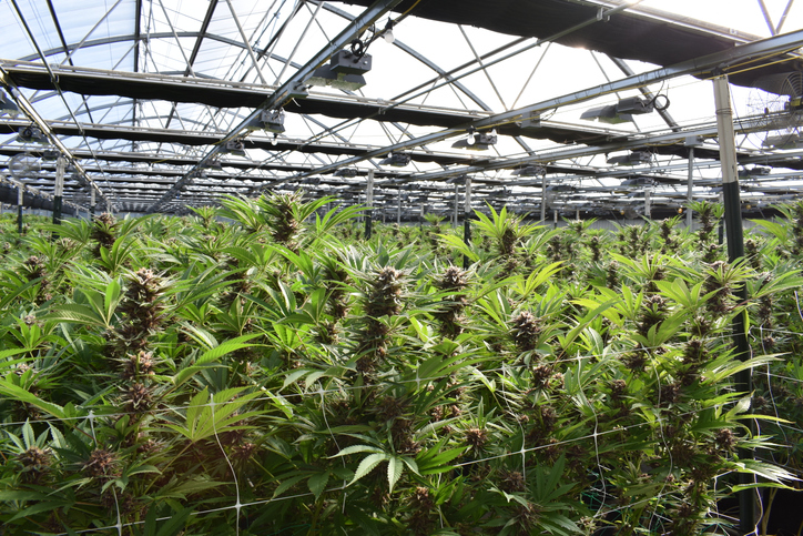 PODCAST – Thursday, April 8: How Close Are We To Legalized Marijuana In CT; Top Albums Of The '80s; Lisa Fischer's Rolling Stones Stories