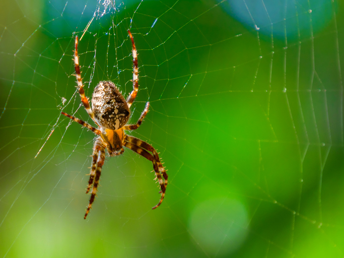 PODCAST – Tuesday, April 27: AJ's Spider Story; Dumb Ass News; Coolest Places In Connecticut